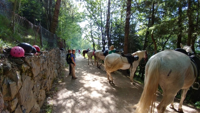 Horses at the top of O'Ceb on Camino Santiago